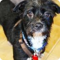 Terrier (Unknown Type, Medium) Mix Dog for adoption in Santa Cruz, California - Emily