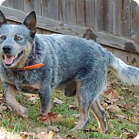 Adopt A Pet :: Malcolm - Joplin, MO