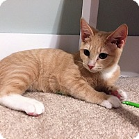 Adopt A Pet :: Brewster - Richmond, VA
