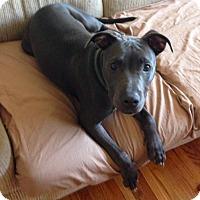 Adopt A Pet :: Kobe - Santa Clarita, CA