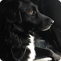Adopt A Pet :: Nala (in adoption process) - El Cajon, CA