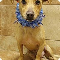 Adopt A Pet :: 240140 Willy - San Antonio, TX