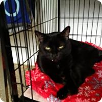 Adopt A Pet :: Sinbad - North Kingstown, RI