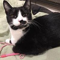 Adopt A Pet :: Tasha - Flint HIll, VA