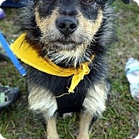 Adopt A Pet :: Brees - Baton Rouge, LA