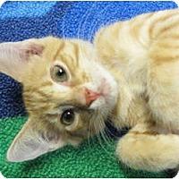Adopt A Pet :: Sebastian - Centerburg, OH
