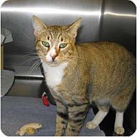 Adopt A Pet :: Koda - Warminster, PA