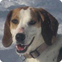 Adopt A Pet :: Mamie - Jacksonville, FL
