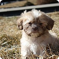 Adopt A Pet :: LATARA - Broomfield, CO