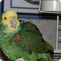 Adopt A Pet :: Mo - St. Louis, MO