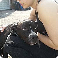 Adopt A Pet :: Bailey - East Orange, NJ