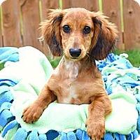 Adopt A Pet :: *Marvin - PENDING - Westport, CT