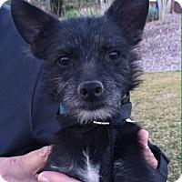 Adopt A Pet :: Jeeter - Phoenix, AZ