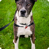 Adopt A Pet :: Courtesy Listing:  Slater - McKenna, WA