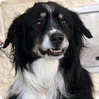 Adopt A Pet :: Tim - Palmdale, CA