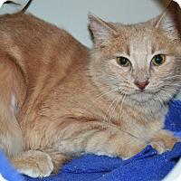 Adopt A Pet :: Elie - Brooklyn, NY
