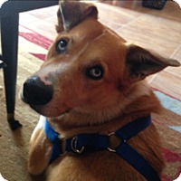 Adopt A Pet :: Crosby - Albemarle, NC