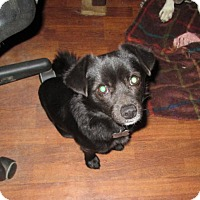 Adopt A Pet :: Gruber - Lincolndale, NY
