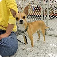 Adopt A Pet :: Kevin - Omaha, NE