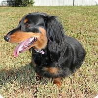 Adopt A Pet :: Eddie - Umatilla, FL