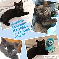 Adopt A Pet :: Shadow - Colmar, PA