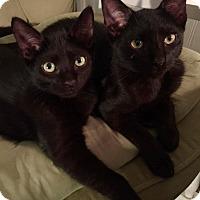 Adopt A Pet :: Pluto - Bayonne, NJ