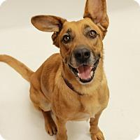 Shepherd (Unknown Type) Mix Dog for adoption in Sedona, Arizona - Kaluah