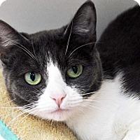 Adopt A Pet :: Juliette - Long Beach, CA