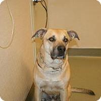 Adopt A Pet :: Duke - Wildomar, CA