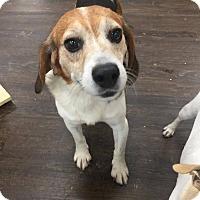 Adopt A Pet :: Harold - Colmar, PA