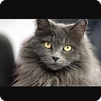 Adopt A Pet :: CoCo - Spring, TX