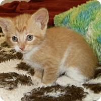 Adopt A Pet :: RHETT - Medford, WI