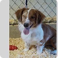 Adopt A Pet :: Carl - East Hartland, CT