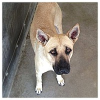 Adopt A Pet :: Brandi URGENT - San Diego, CA