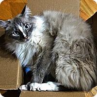 Adopt A Pet :: Dante - Davis, CA