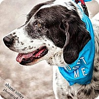 Adopt A Pet :: Bubba - Loveland, CO
