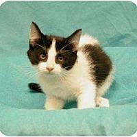Adopt A Pet :: Tristan - Sacramento, CA