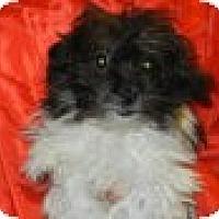 Adopt A Pet :: Vinales - Antioch, IL