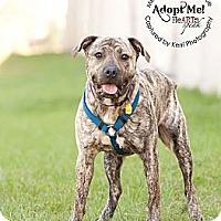 Adopt A Pet :: Grayson - Medina, OH