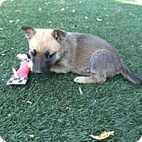 Adopt A Pet :: Lenny - Tustin, CA