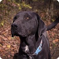 Adopt A Pet :: Fred - Salem, MA