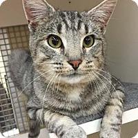 Adopt A Pet :: Zeke - Merrifield, VA