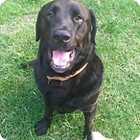 Adopt A Pet :: Bruno -Adoption Pending - Kingwood, TX