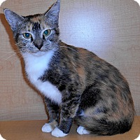 Adopt A Pet :: Paloma - Chattanooga, TN
