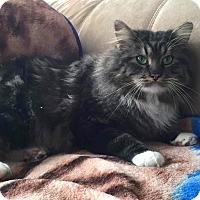 Adopt A Pet :: Scrappy - Addison, IL