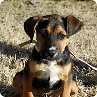 Adopt A Pet :: Melanie in CT - Manchester, CT