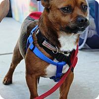Adopt A Pet :: O'Malley - Oakley, CA