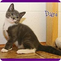 Adopt A Pet :: Dani - Shippenville, PA