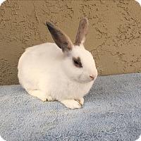 Adopt A Pet :: Cooper - Bonita, CA