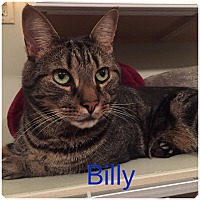 Adopt A Pet :: BILLY - Hamilton, NJ